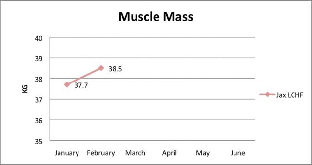 Muscle Feb